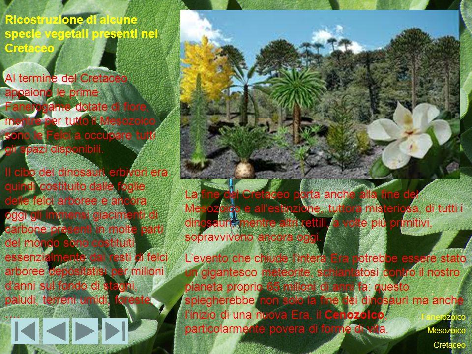 Ricostruzione di alcune specie vegetali presenti nel Cretaceo