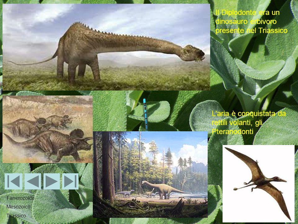 Il Diplodonte era un dinosauro erbivoro presente nel Triassico