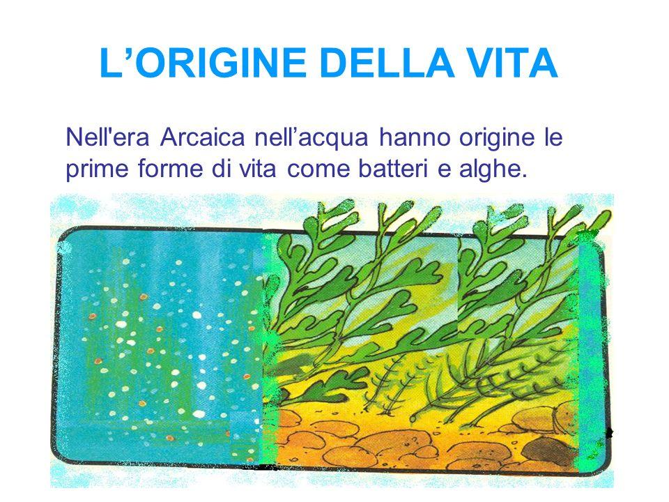 L'ORIGINE DELLA VITA Nell era Arcaica nell'acqua hanno origine le prime forme di vita come batteri e alghe.