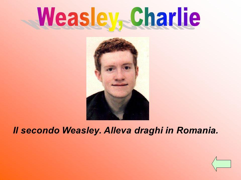 Weasley, Charlie Il secondo Weasley. Alleva draghi in Romania.