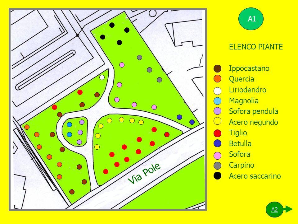 Via Pole A1 ELENCO PIANTE Ippocastano Quercia Liriodendro Magnolia