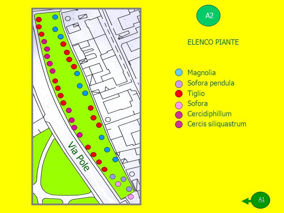 Via Pole A2 ELENCO PIANTE Magnolia Sofora pendula Tiglio Sofora