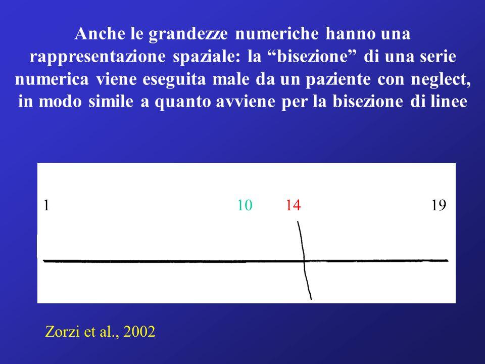 Anche le grandezze numeriche hanno una rappresentazione spaziale: la bisezione di una serie numerica viene eseguita male da un paziente con neglect, in modo simile a quanto avviene per la bisezione di linee