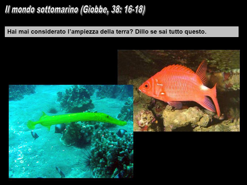 Il mondo sottomarino (Giobbe, 38: 16-18)