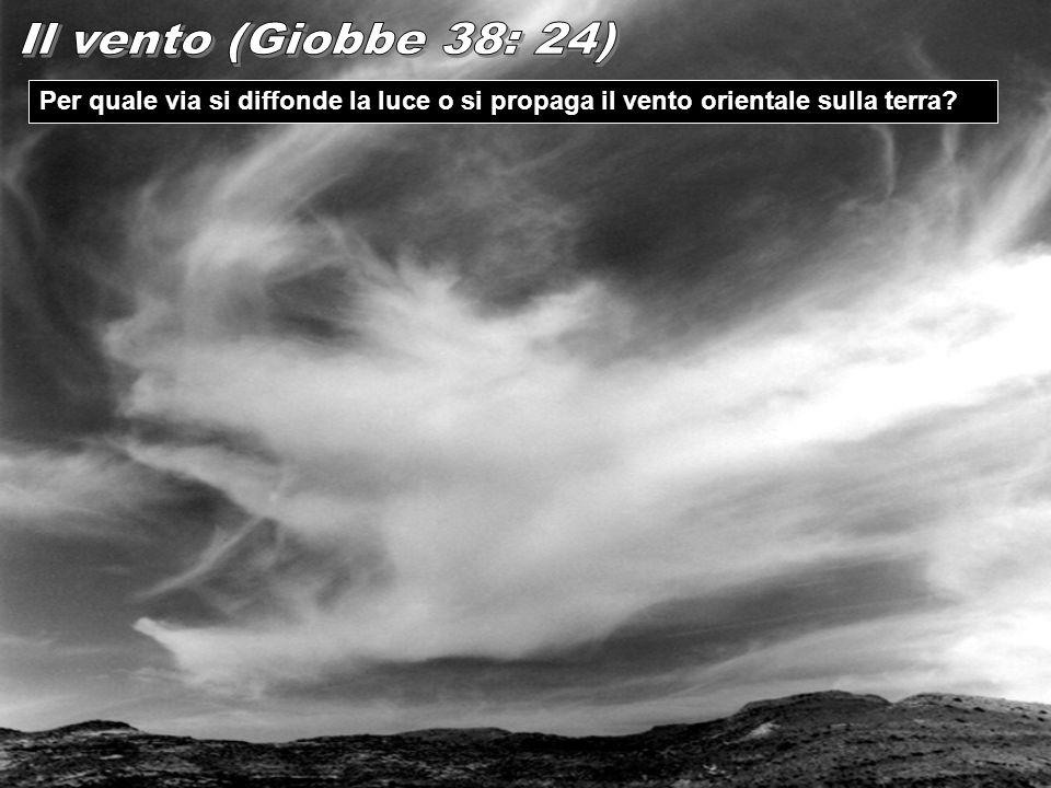 Il vento (Giobbe 38: 24) Per quale via si diffonde la luce o si propaga il vento orientale sulla terra