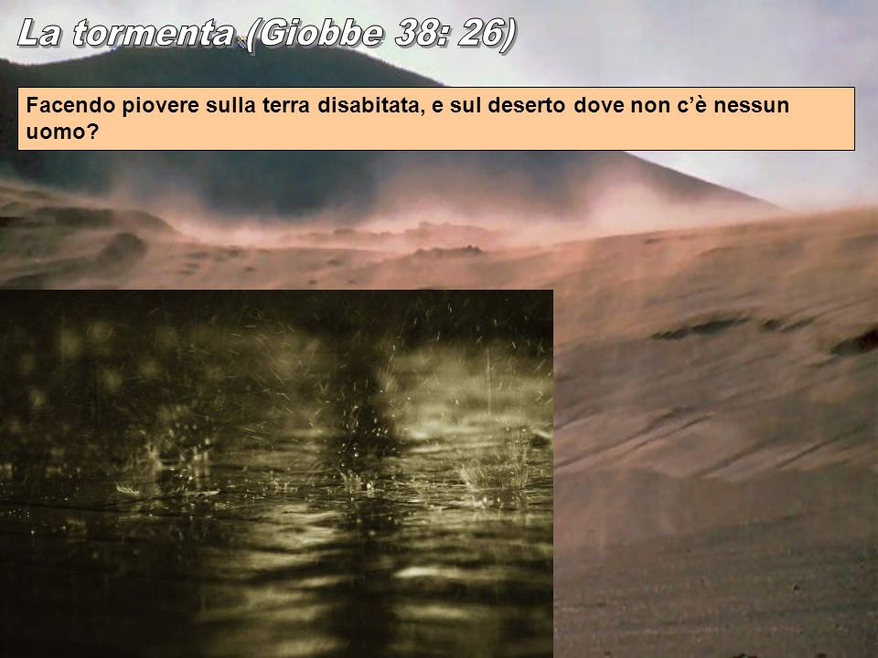 La tormenta (Giobbe 38: 26) Facendo piovere sulla terra disabitata, e sul deserto dove non c'è nessun uomo