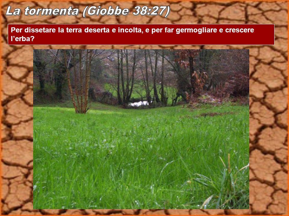 La tormenta (Giobbe 38:27) Per dissetare la terra deserta e incolta, e per far germogliare e crescere l'erba