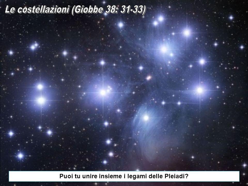Puoi tu unire insieme i legami delle Pleiadi
