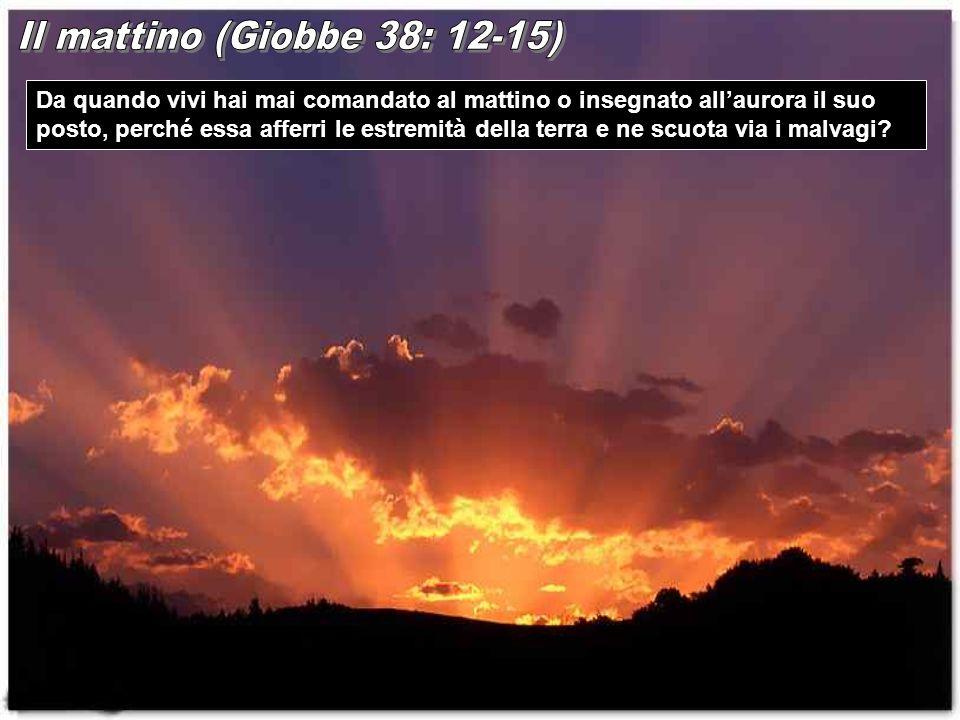 Il mattino (Giobbe 38: 12-15)
