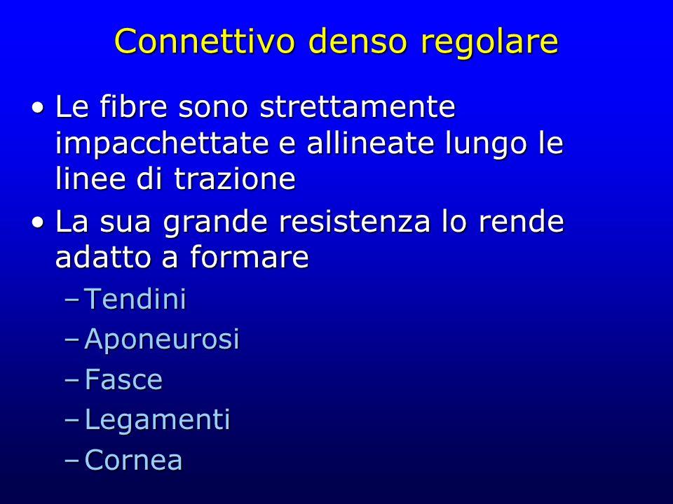Connettivo denso regolare