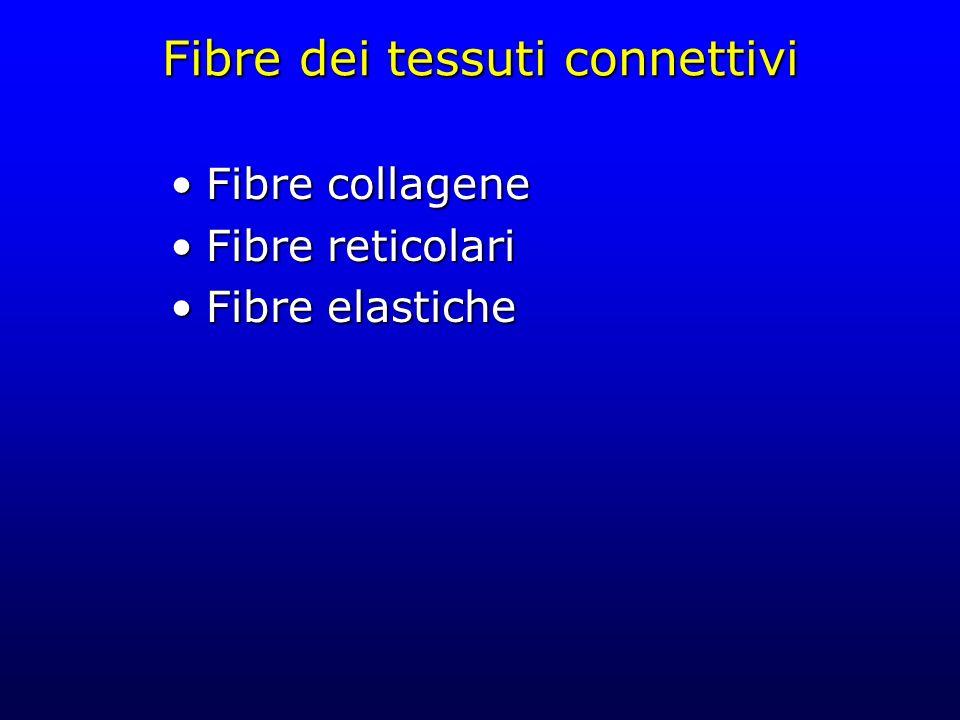 Fibre dei tessuti connettivi