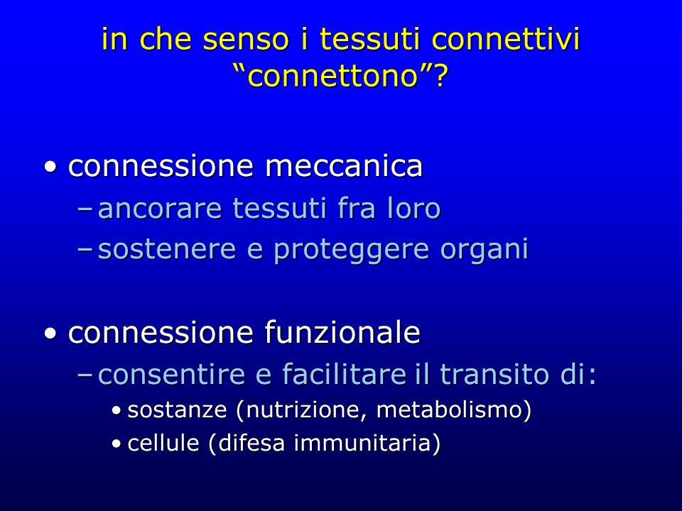 in che senso i tessuti connettivi connettono