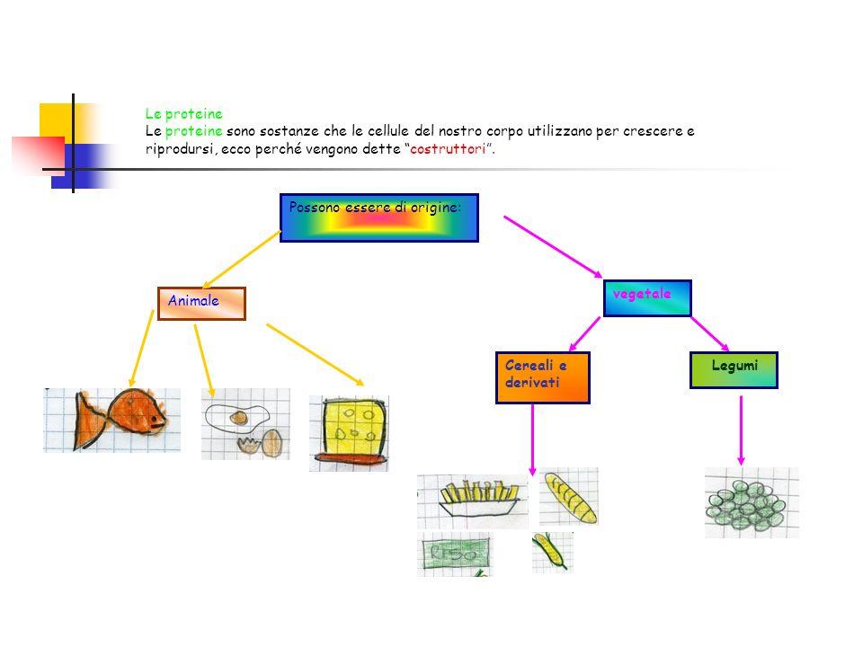 Le proteine Le proteine sono sostanze che le cellule del nostro corpo utilizzano per crescere e riprodursi, ecco perché vengono dette costruttori .
