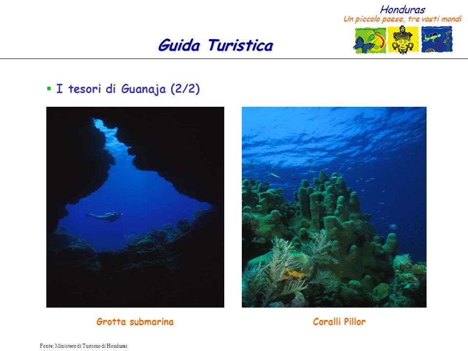 I tesori di Guanaja (2/2) Grotta submarina Coralli Pillor