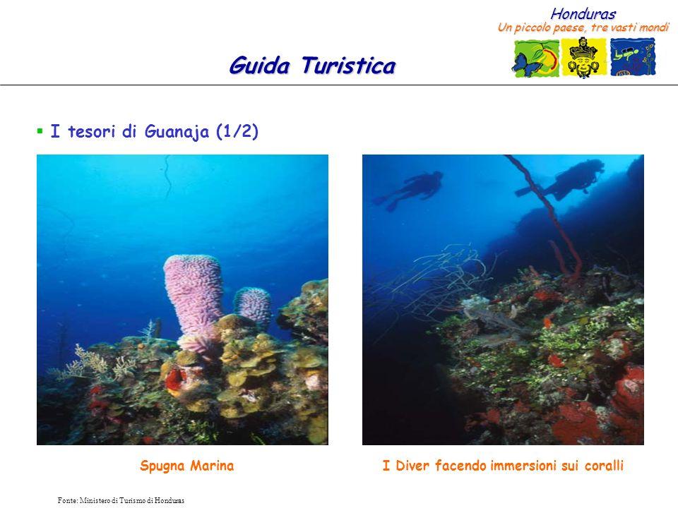 I Diver facendo immersioni sui coralli