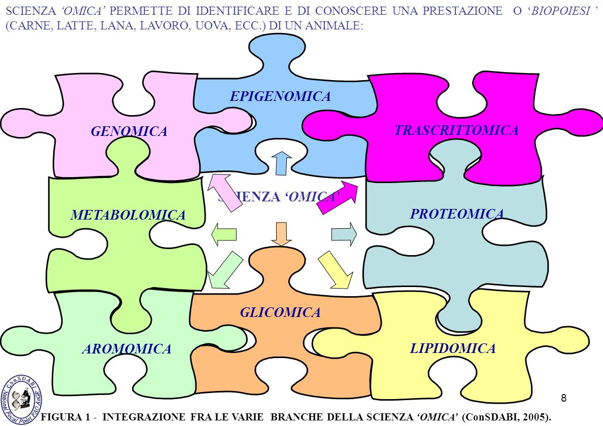 EPIGENOMICA GENOMICA TRASCRITTOMICA METABOLOMICA PROTEOMICA