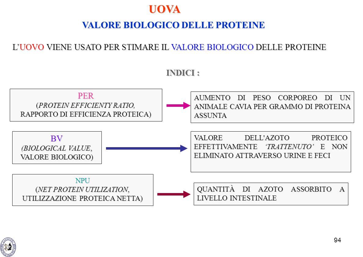 UOVA VALORE BIOLOGICO DELLE PROTEINE