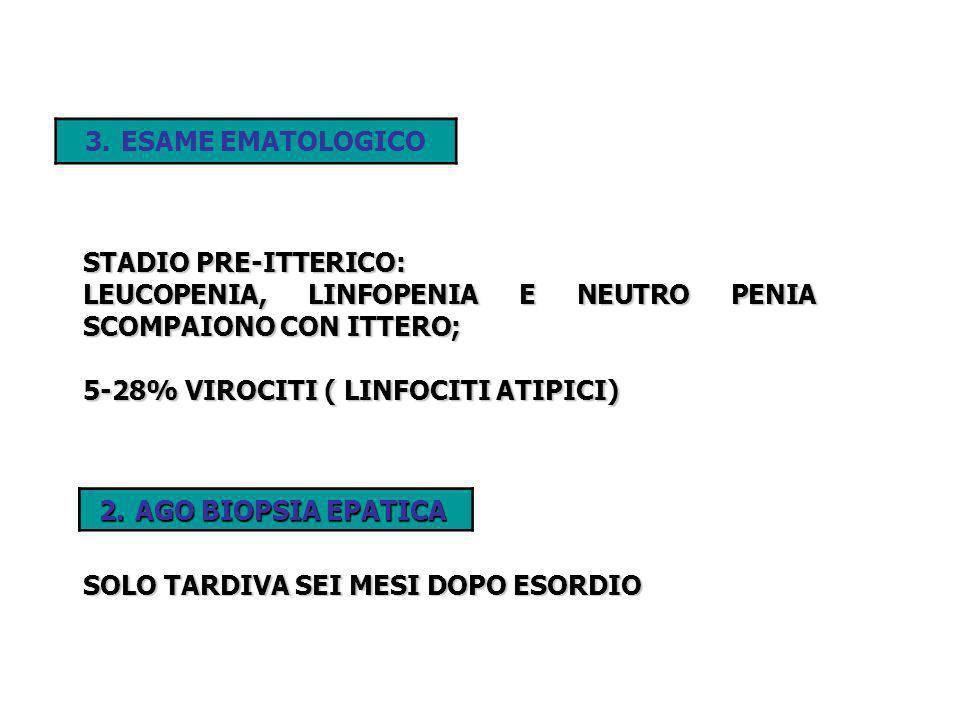 ESAME EMATOLOGICOSTADIO PRE-ITTERICO: LEUCOPENIA, LINFOPENIA E NEUTRO PENIA SCOMPAIONO CON ITTERO; 5-28% VIROCITI ( LINFOCITI ATIPICI)