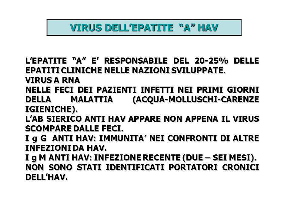 VIRUS DELL'EPATITE A HAV