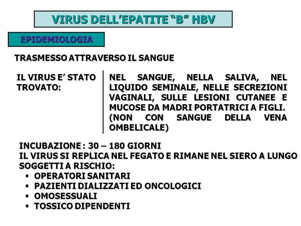 VIRUS DELL'EPATITE B HBV