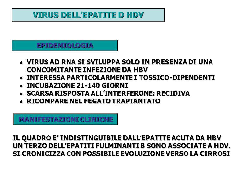 VIRUS DELL'EPATITE D HDV