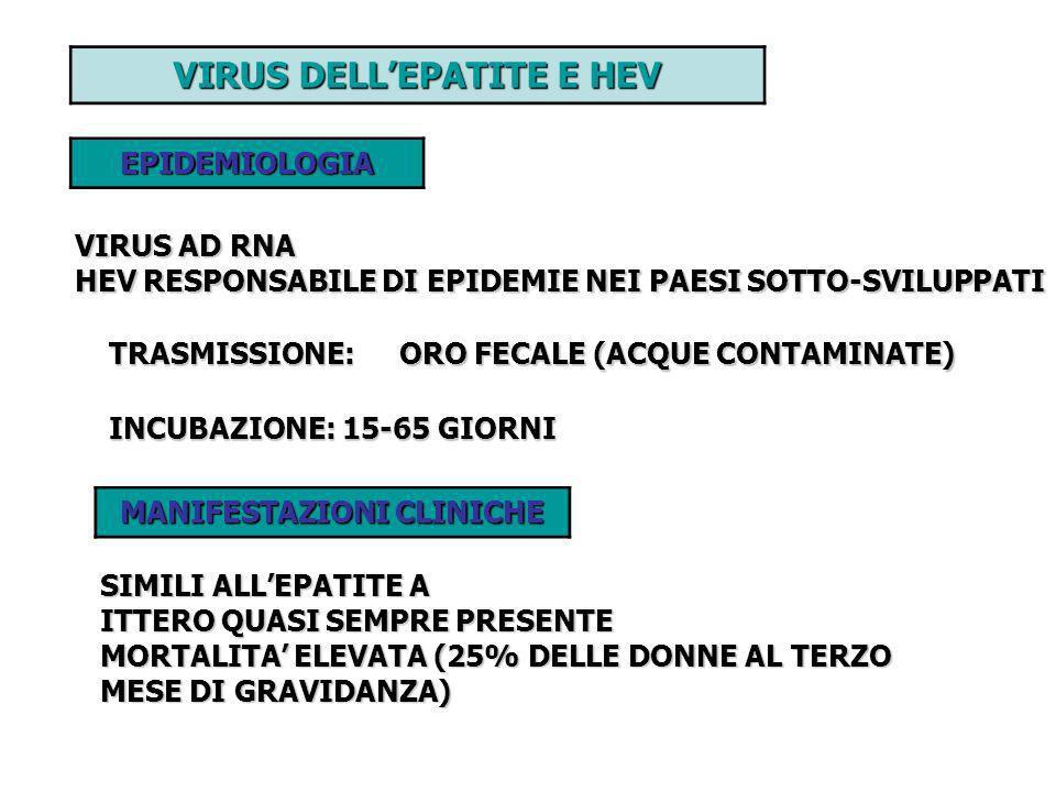 VIRUS DELL'EPATITE E HEV MANIFESTAZIONI CLINICHE