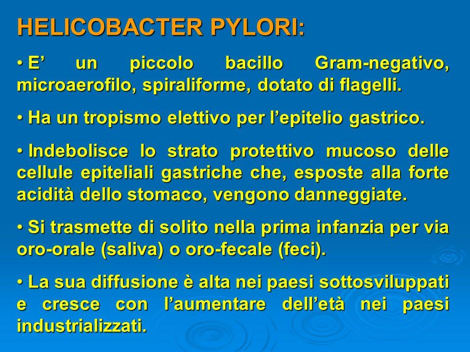 HELICOBACTER PYLORI: E' un piccolo bacillo Gram-negativo, microaerofilo, spiraliforme, dotato di flagelli.