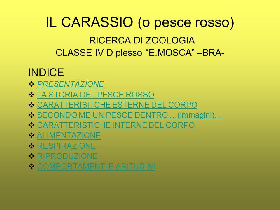 IL CARASSIO (o pesce rosso) RICERCA DI ZOOLOGIA CLASSE IV D plesso E