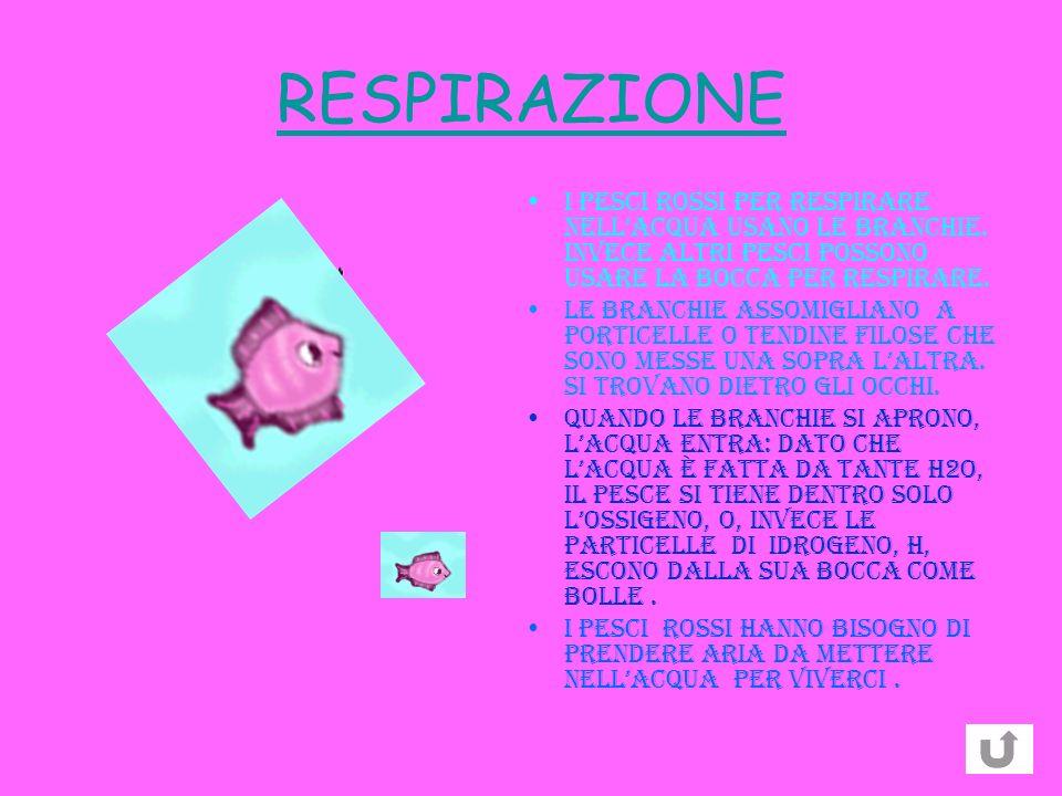 RESPIRAZIONE I pesci ROSSI per respirare nell'acqua usano le branchie. Invece altri pesci possono usare la bocca per respirare.