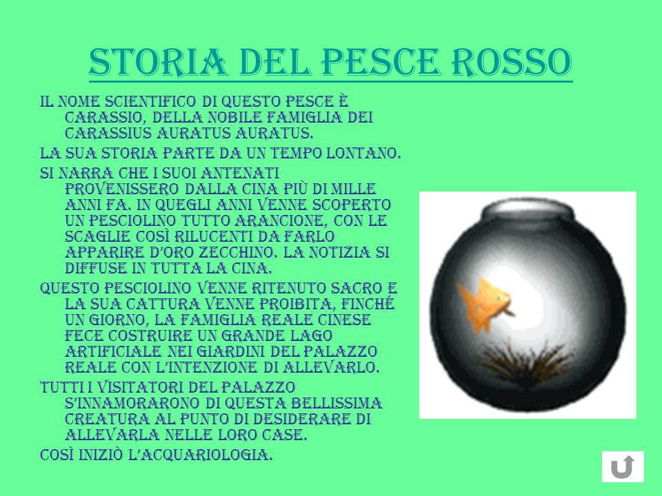 STORIA DEL PESCE ROSSO Il nome scientifico di questo pesce è Carassio, della nobile famiglia dei Carassius Auratus Auratus.