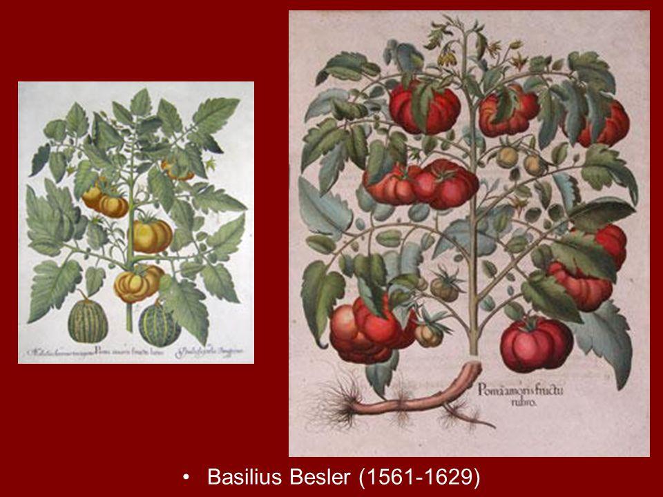 Basilius Besler (1561-1629)