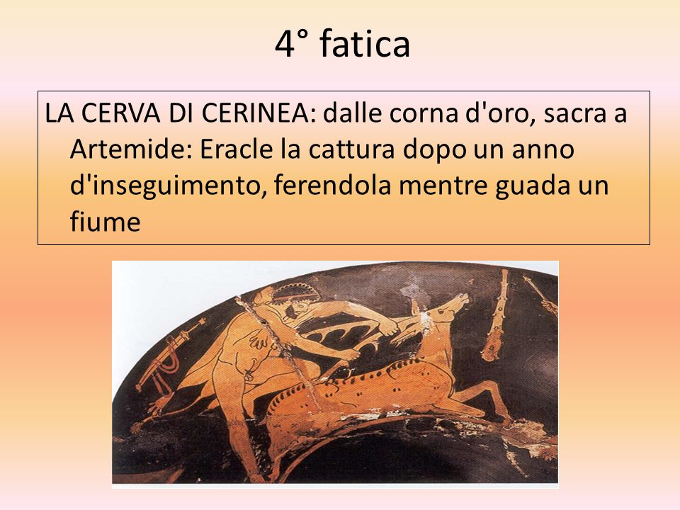 4° fatica LA CERVA DI CERINEA: dalle corna d oro, sacra a Artemide: Eracle la cattura dopo un anno d inseguimento, ferendola mentre guada un fiume.