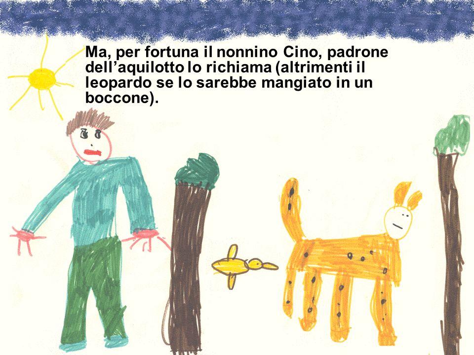 Ma, per fortuna il nonnino Cino, padrone dell'aquilotto lo richiama (altrimenti il leopardo se lo sarebbe mangiato in un boccone).
