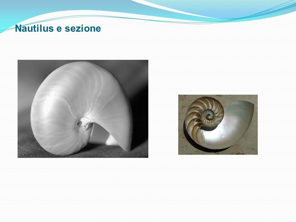 Nautilus e sezione