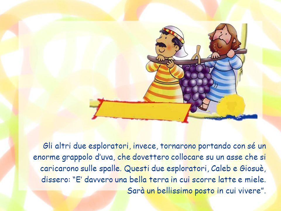 Gli altri due esploratori, invece, tornarono portando con sé un enorme grappolo d'uva, che dovettero collocare su un asse che si caricarono sulle spalle.