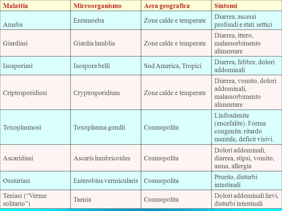 Malattia Microorganismo. Aera geografica. Sintomi. Ameba. Entamoeba. Zone calde e temperate. Diarrea, ascessi profondi e stati settici.
