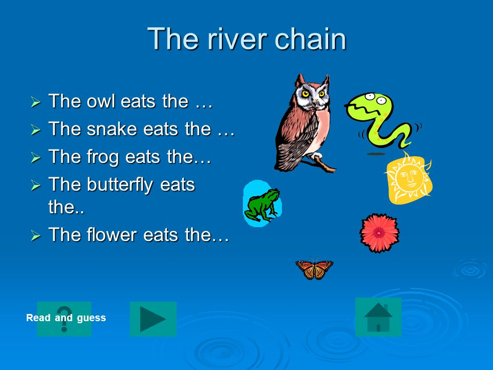 The river chain The owl eats the … The snake eats the …