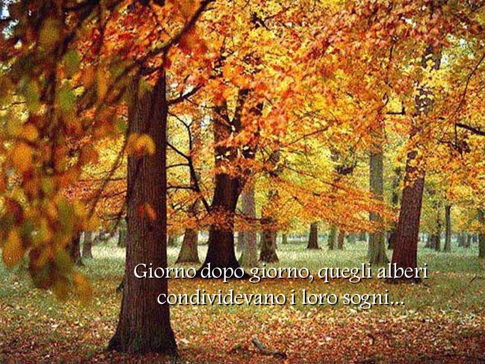 Giorno dopo giorno, quegli alberi condividevano i loro sogni...
