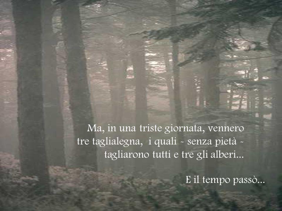 Ma, in una triste giornata, vennero tre taglialegna, i quali - senza pietà - tagliarono tutti e tre gli alberi...