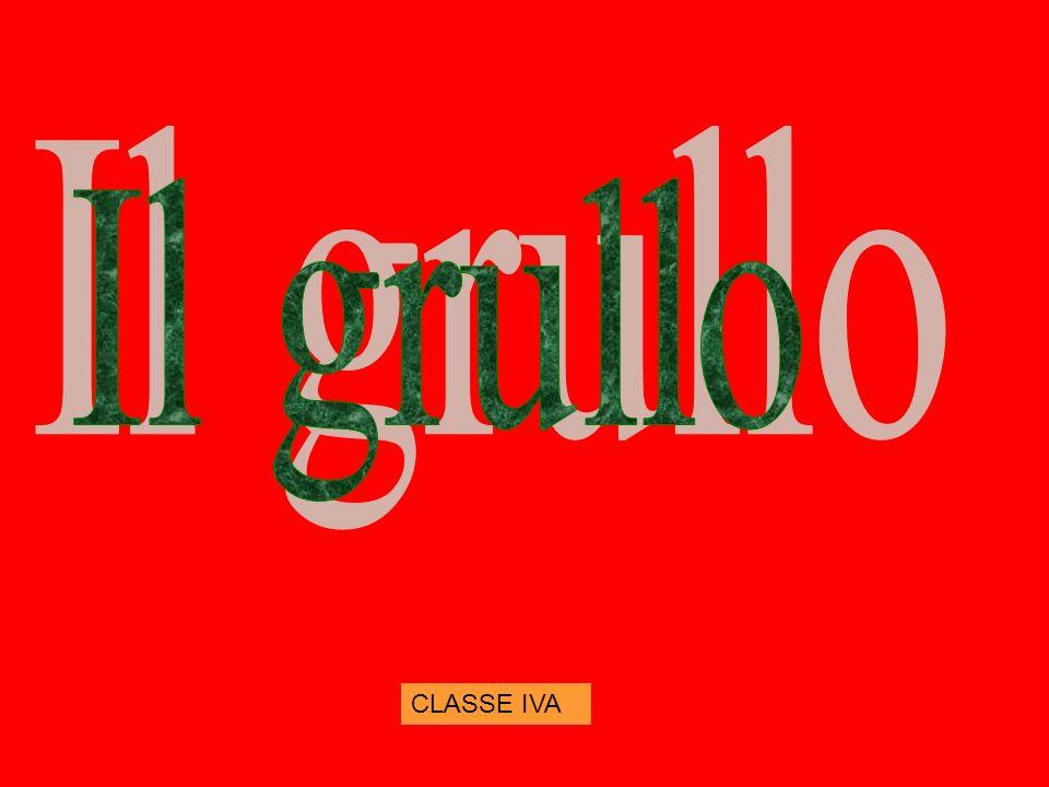Il grullo CLASSE IVA