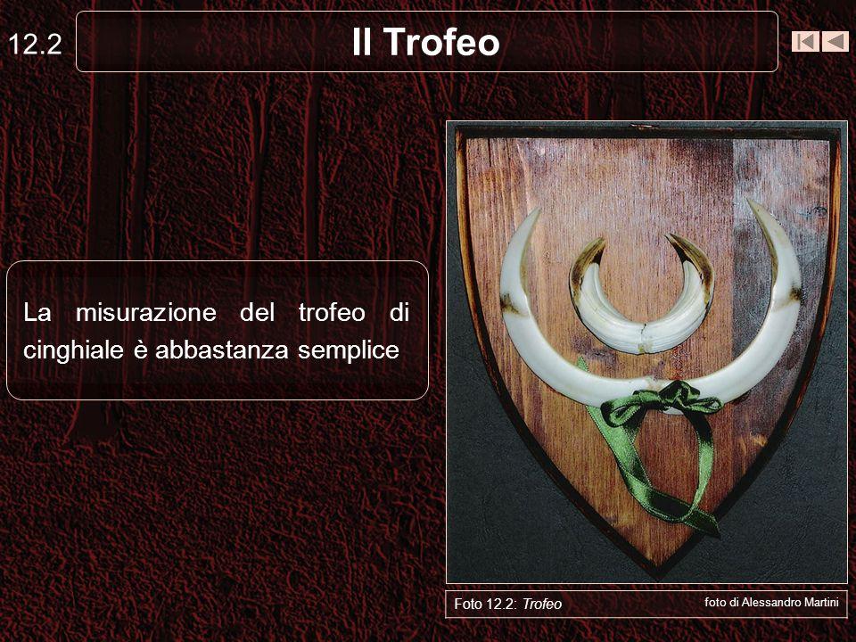 12.2 Il Trofeo. La misurazione del trofeo di cinghiale è abbastanza semplice. Capriolo. Foto 12.2: Trofeo.