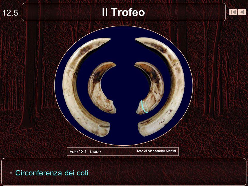 Il Trofeo - Circonferenza dei coti 12.5 Foto 12.1: Trofeo Capriolo