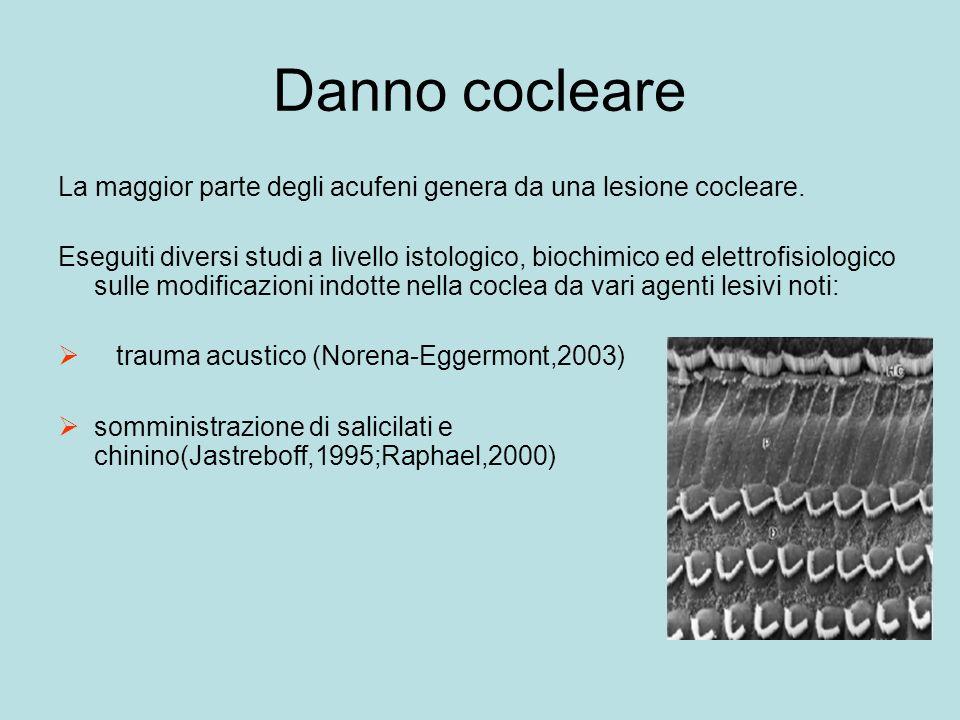 Danno cocleare La maggior parte degli acufeni genera da una lesione cocleare.