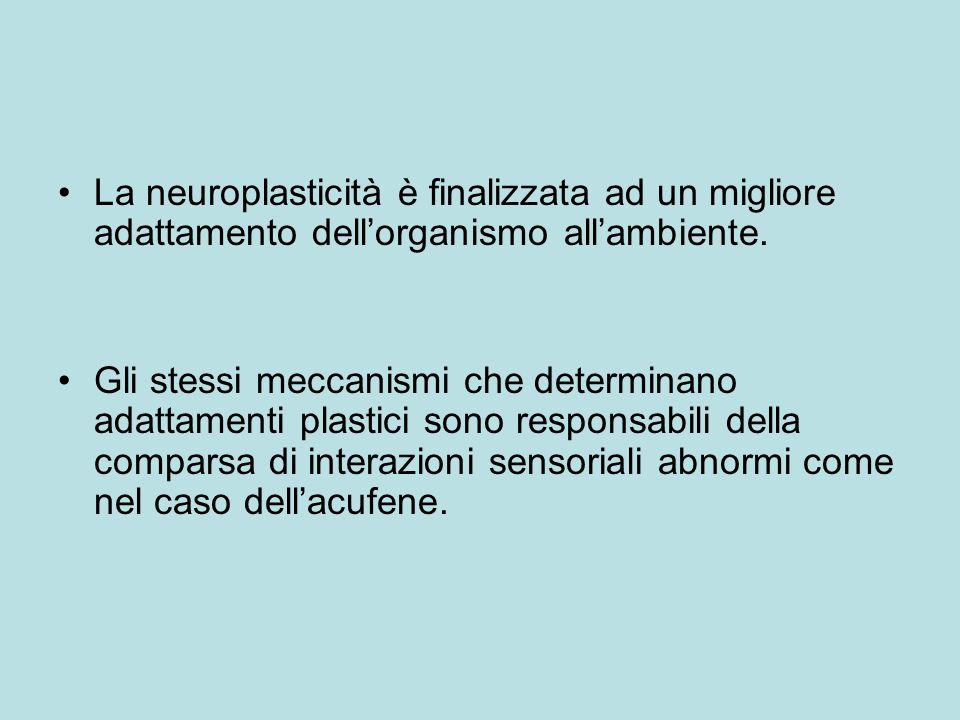 La neuroplasticità è finalizzata ad un migliore adattamento dell'organismo all'ambiente.