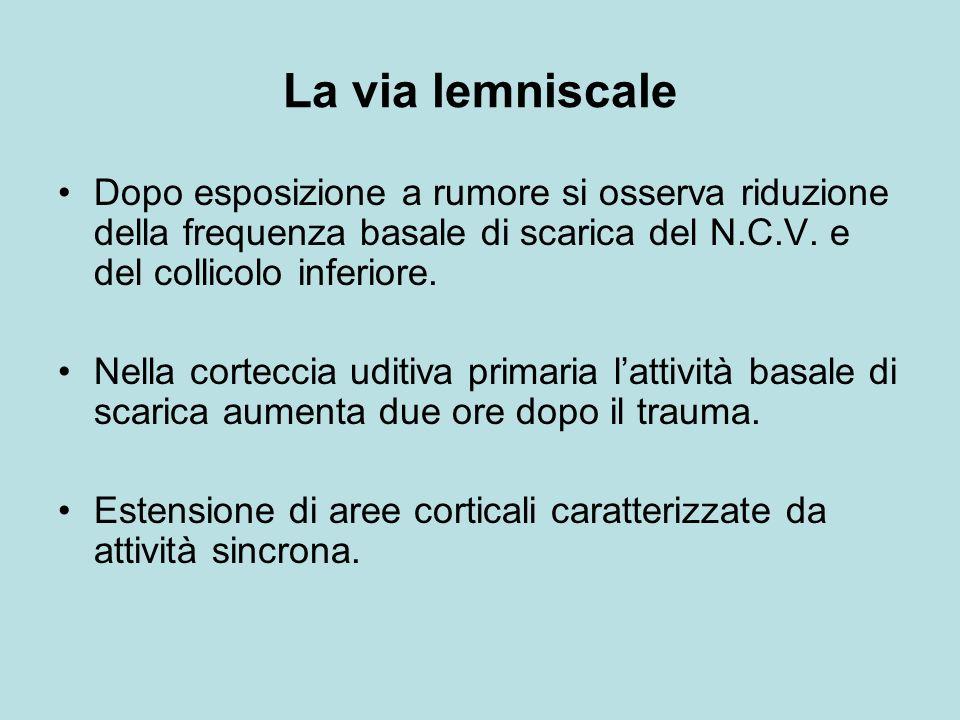 La via lemniscale Dopo esposizione a rumore si osserva riduzione della frequenza basale di scarica del N.C.V. e del collicolo inferiore.