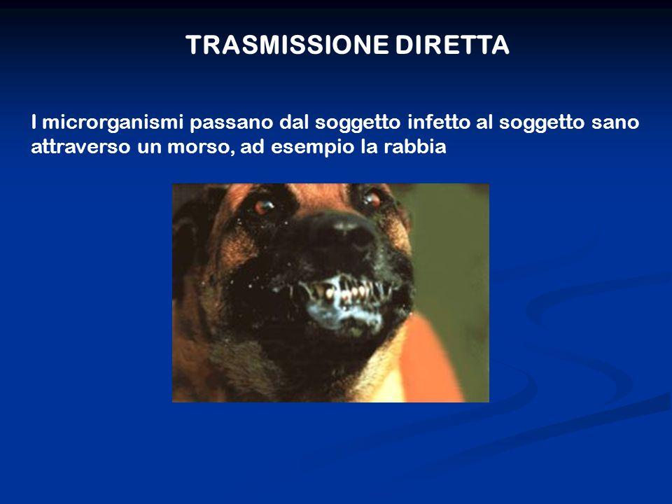 TRASMISSIONE DIRETTA I microrganismi passano dal soggetto infetto al soggetto sano attraverso un morso, ad esempio la rabbia.