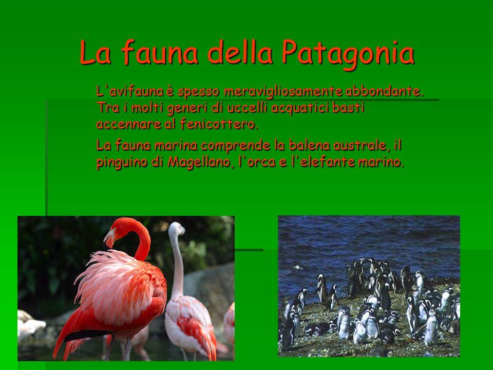 La fauna della Patagonia