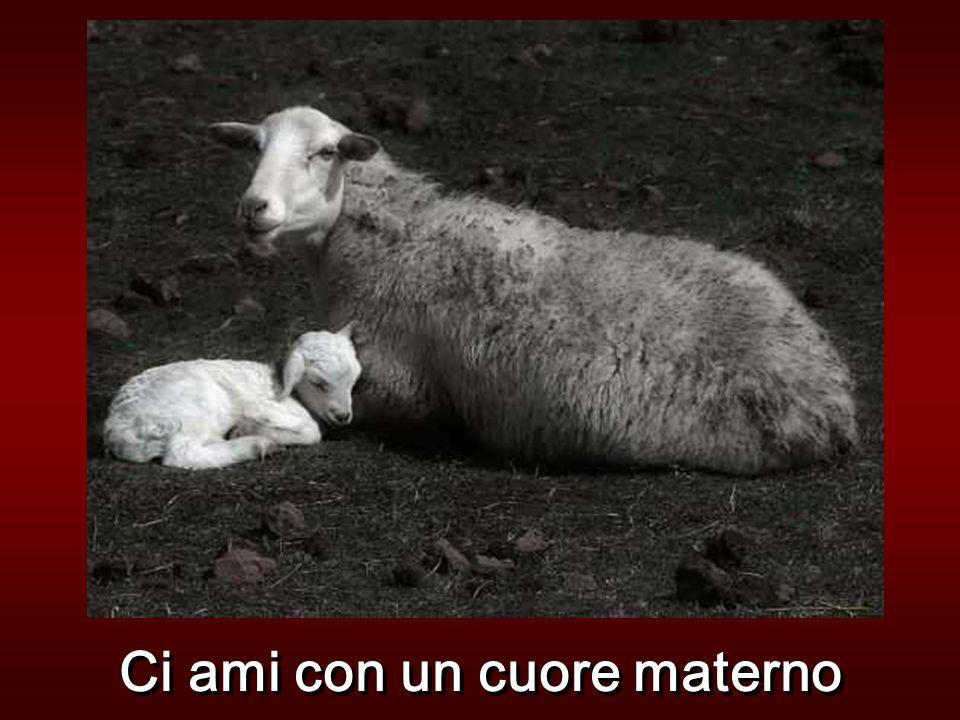 Ci ami con un cuore materno