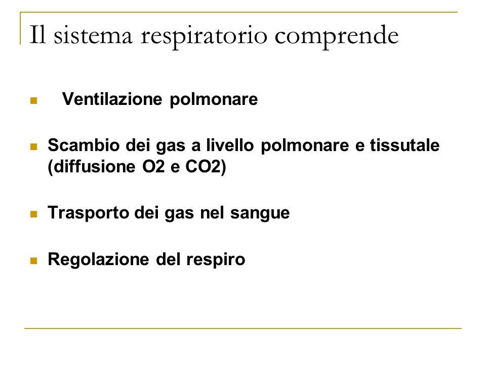 Il sistema respiratorio comprende