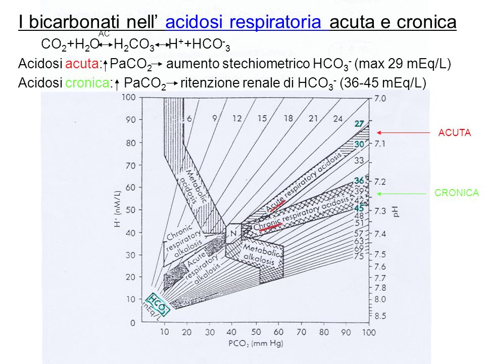 I bicarbonati nell' acidosi respiratoria acuta e cronica